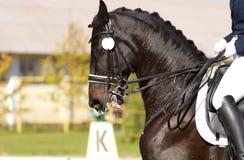 Realistisches Bild der Formalität kleidete Horsewoman auf einem Pferd Stockfoto