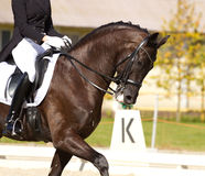 Realistisches Bild der Formalität kleidete Horsewoman auf einem Pferd Stockfotografie