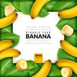 Realistisches Obstbananeplakat In der Mitte der Fahne mit Bananen, Scheiben und Blättern herum lizenzfreie abbildung