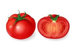 Realistisches rundes Tomatengemüse des Vektors Stockfotos