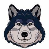 Realistisches Wolfporträt Lizenzfreies Stockfoto