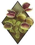Realistisk bild av en carniviorous växt stock illustrationer