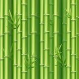 Realistisk detaljerad bakgrund för bambuskott 3d vektor Royaltyfri Fotografi