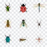 Realistisk fluga, Damselfly, nyckelpiga och andra vektorbeståndsdelar Uppsättningen av realistiska symboler för kryp inkluderar o Royaltyfri Fotografi