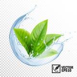 realistisk genomskinlig färgstänk för vektor 3D av vatten med sidor av te eller mintkaramellen Redigerbart handgjort ingrepp vektor illustrationer