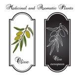realistisk grön olivgrön för filial Royaltyfri Illustrationer