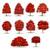 Realistisk höstträdpacke Isolerade vektorträd på vitbaksida Royaltyfria Bilder