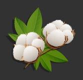 Realistisk illustration för bomullsfilialvektor Royaltyfria Bilder