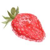 Realistisk isolerad jordgubbe för vattenfärg Arkivfoto
