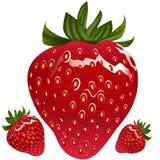 realistisk jordgubbe Arkivfoton