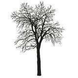 Realistisk kontur av trädet hend drunknar Fotografering för Bildbyråer