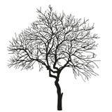 Realistisk kontur av trädet vektor Royaltyfri Bild