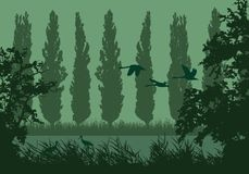 Realistisk landskapillustration med våtmarker och träsket Vasser och grönt gräs med träd, popplar och flygfåglar Storkar och royaltyfri illustrationer