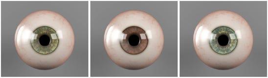 Realistisk mänsklig ögonglobiriselev royaltyfri foto