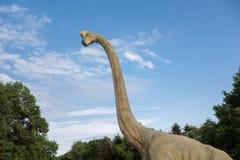 Realistisk modell för Brachiosaurus Head slut av dinosaurien Fotografering för Bildbyråer