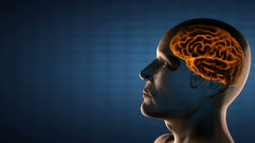 Realistisk röntgenfotograferingbildläsning för mänsklig hjärna stock illustrationer
