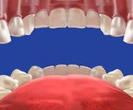 realistisk sikt för hål för mun 3d från inre royaltyfri illustrationer