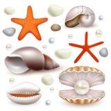 Realistisk snäckskal för vektor och sjöstjärnasymbolsuppsättning stock illustrationer