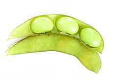 realistisk soy för bönaillustration Fotografering för Bildbyråer