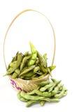 realistisk soy för bönaillustration Arkivbild