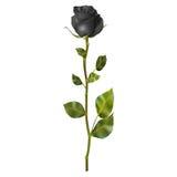 Realistisk svartros 10 eps Arkivfoto