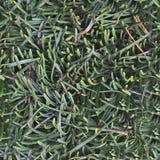 Realistisk textur för foto av gröna växter i hög upplösning royaltyfri fotografi