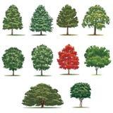 Realistisk trädpacke Isolerade vektorträd på vit bakgrund Arkivfoto