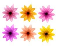 Realistisk uppsättning 3D av färgrika Daisy Flowers för vårsäsong Arkivfoton