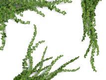 Realistisk vektormurgrönauppsättning Arkivfoton