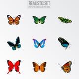Realistiska Demophoon, monark, grön påfågel och andra vektorbeståndsdelar Uppsättningen av realistiska symboler för fjäril inklud Royaltyfri Fotografi
