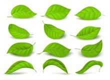 Realistiska gröna teblad med vattendroppar som isolerades på den vita vektorn, ställde in stock illustrationer