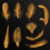 Realistiska lyxiga guld- stam- fjädrar ställde in isolerat på svart vektor illustrationer