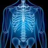 Realistiska röntgenstråleskott Lutningar och lager för bildbruksraster som blandar effekter vektor illustrationer
