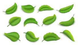 Realistiska sidor Den gröna vårväxten lämnar isolerat på vitt, teblad för beståndsdelar för natur 3D livliga Växt- uppsättning fö stock illustrationer