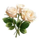 Realistiska vita rosor som isoleras på vit bakgrund arkivbild