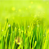 Realistiskt gräs på den gröna miljön Royaltyfri Fotografi