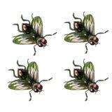 Realistyczna akwareli komarnica ilustracji