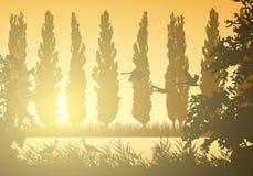 Realistyczna krajobrazowa ilustracja z bagnami i bagnem Płochy i trawa z drzewami, topolami i latającymi ptakami, Bociany i łabęd ilustracji