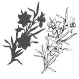 Realistyczna ręka rysująca kwitnie daffodils, narcyz odizolowywający na bielu ilustracja wektor
