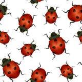 Realistycznej Szczegółowej insekt biedronki tła Bezszwowy Deseniowy wektor ilustracji