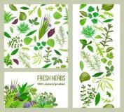 Realistyczni popularni kulinarni ziele łatwy redaguje etykietki ustawiać sklepowy znak lampasy i karty Obrazy Royalty Free
