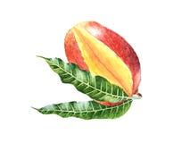 Realistyczny akwareli owoc mango ilustracja wektor