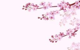 Realistyczny chińczyk menchii Sakura tło na miękkiej części różanym tle Orientała wzoru kwiatu okwitnięcia wiosny tło 3d royalty ilustracja
