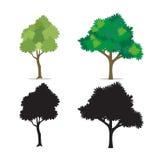 Realistyczny drzewny wektor ustawiający odosobniony biały tło ilustracja wektor