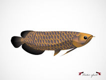 Realistyczny graficznego projekta wektor arowana ryba Obrazy Royalty Free