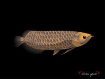 Realistyczny graficznego projekta wektor arowana ryba z czarnym tłem Obrazy Royalty Free