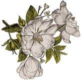 Realistyczny kwiatu wzór Rocznika barok Różany dogrose, rosehip, brier wally Rysunkowy rytownictwo ilustracji