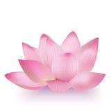 realistyczny Lotosowy kwiat Obrazy Royalty Free