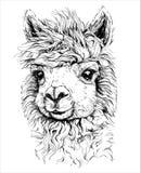 Realistyczny nakreślenie LAMA alpaga, czarny i biały rysunek, odizolowywający na bielu
