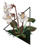 Realistyczny obrazek pociągany ręcznie Occonee Dzwon obrazy royalty free
